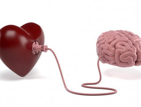neurobiologia del amor bioquimica